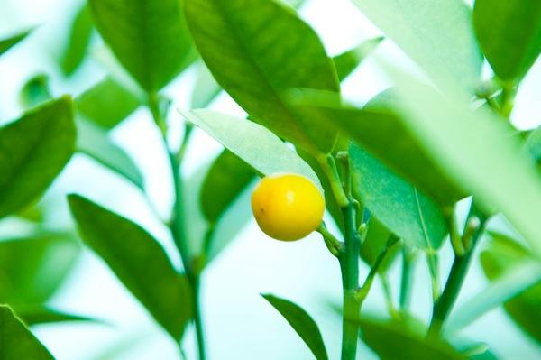 [S]柑橘系の香りがダイエットには効果的! タブレット系のお菓子はどうなの?