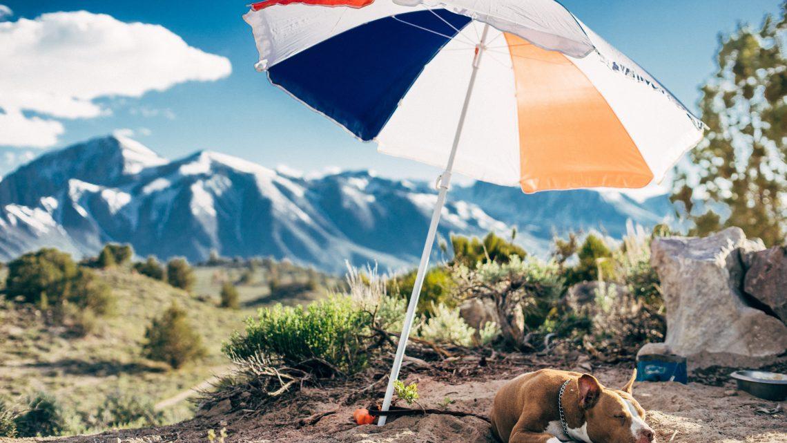 男性が日傘をさすことについて、日傘歴4年目の僕が思うこと